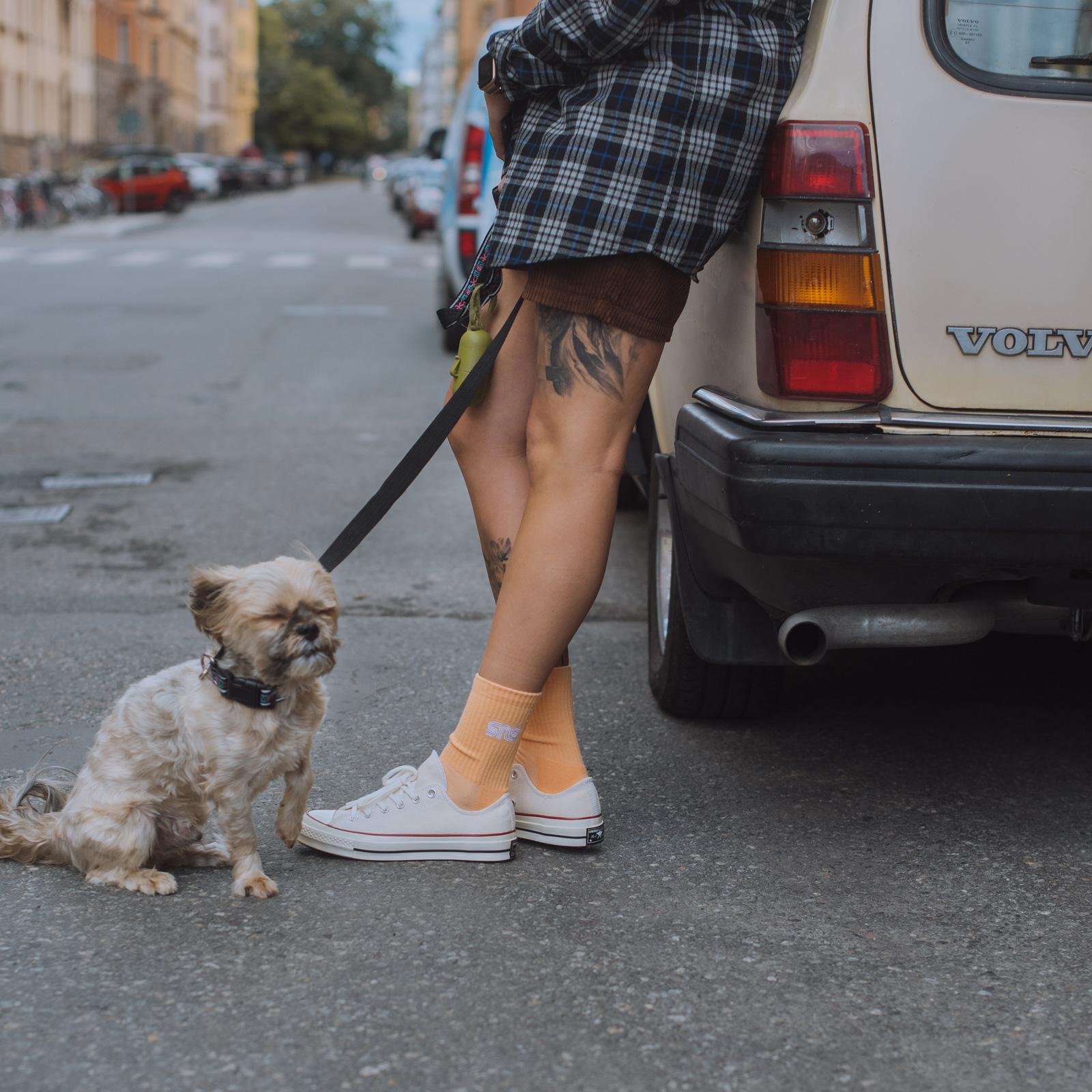 converse chien